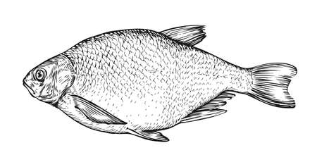Fish sketch. Hand drawn bream in engraving style. Vector illustration Vecteurs