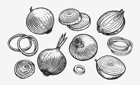 Onion bulb and rings. Hand drawn fresh vegetables sketch vector illustration