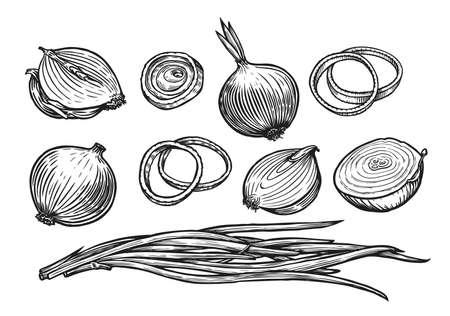 Onion bulb and rings. Fresh vegetables sketch vector illustration Vettoriali