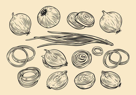 Onion bulb and rings sketch. Fresh vegetables set hand drawn vector illustration