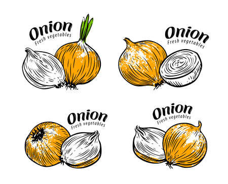 Onion whole and sliced. Fresh vegetables label set vector illustration