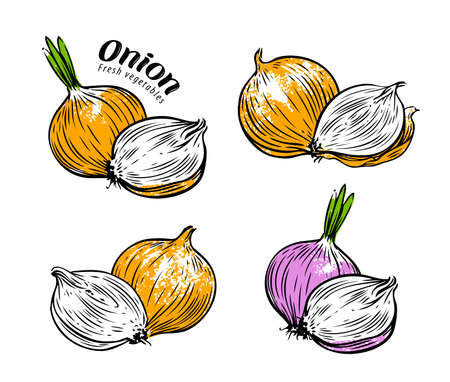 Vegetables set. Whole onion and cross section. Vector illustration isolated on white Vettoriali
