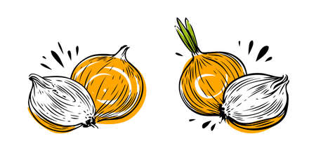 Onion whole and sliced. Vegetables symbol vector illustration