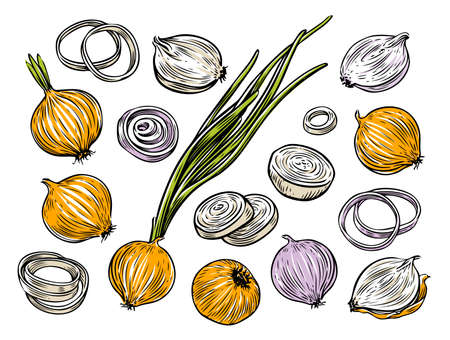 Onion bulb and rings.