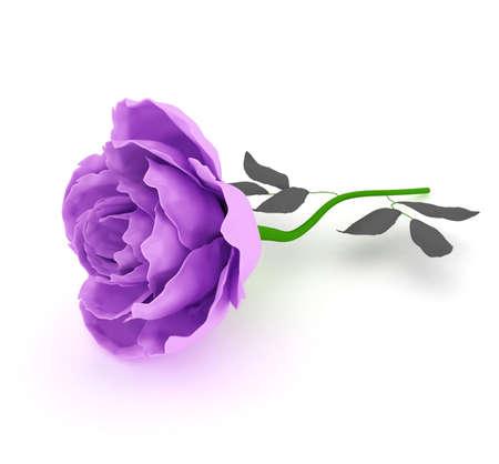 garden flowers-roses