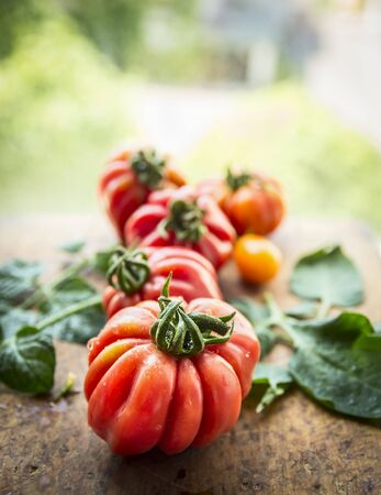 fresh produce: different tomatoes on a branch with leaves, on a natural background, close up