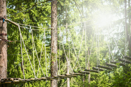 climbing plant: rope bridge in climbing forest or high wire park on nature sunny background