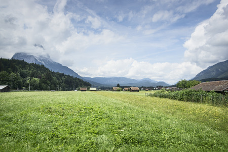 dandelion snow: landscape in the Alps with fresh green meadows and blooming flowers and snowcapped mountain tops in the background