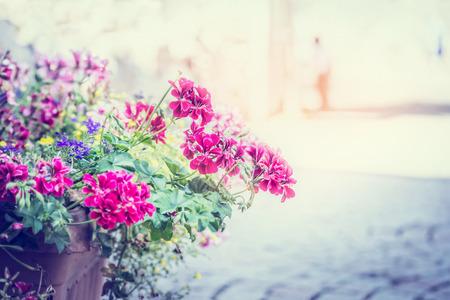 lobelia: geranium flowers in a pot on the street on solar background blur city