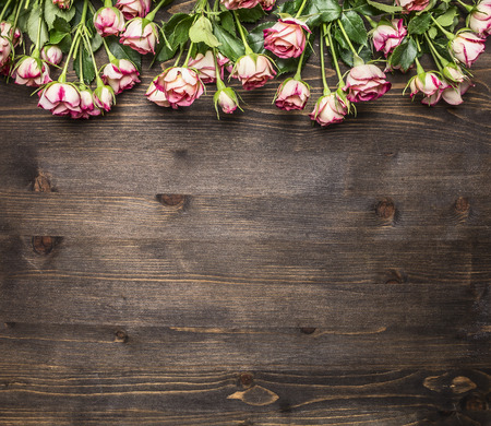 many branches: many pink shrub roses, on the branches, laid out in a line border, place for text on wooden rustic background top view Stock Photo