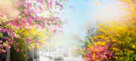Beautiful colorful spring flowers on a background of the sun-drenched city streets, banner