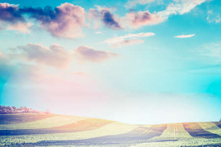 beveled: beautiful natural landscape, field, beveled stripes in the sunlight, with a sunset sky, blurred background