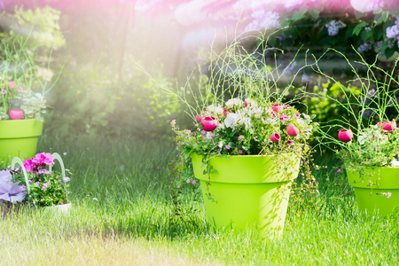 flowerbed with beautiful flowers standing on the grass in the garden, the sun's rays, blurred background Фото со стока