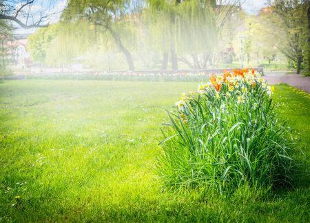 petunia wild: sunny day in the park, flower beds, blurred, boke Stock Photo