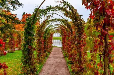 arch of red autumn leaves