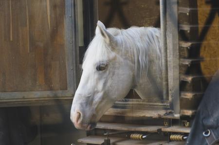 blinders: Horses in harness. Blinders, saddle, bridle, and other attributes on horseback. Sport Horse Riding. Karetnaya team.