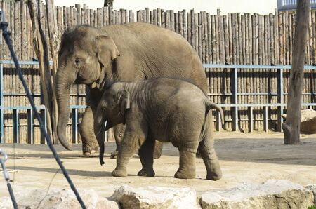 tusks: The elephant in the zoo. Big, big, strong animal. Safari object. Huge tusks.