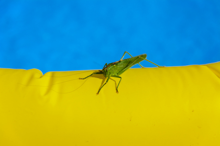 Green locust on the edge of the childrens pool.