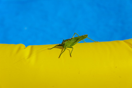 feelers: Green locust on the edge of the childrens pool.