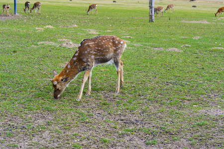 Deer - large animals with an elegant body and slender, shapely legs