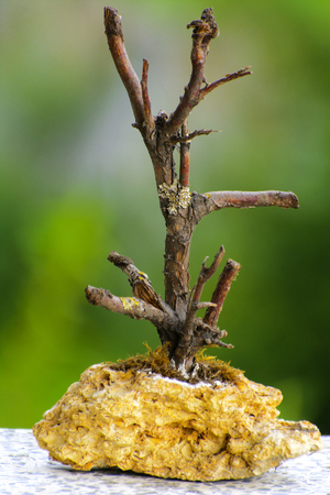 allegory painting: Homemade sculpture from a branch with a base of stone