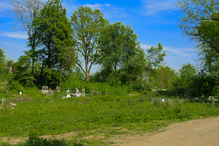 An old abandoned cemetery, crosses and graves overgrown with tall grass against the backdrop of tall trees and a blue sky. Stock Photo