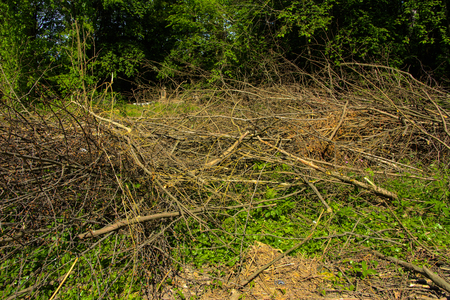 Pile of brushwood and round wood stacked on green grass against a background of green forest outdoors Firewood in the forest. Dry fallen trees. Dry branches are the cause of forest fires in the summer. Foto de archivo