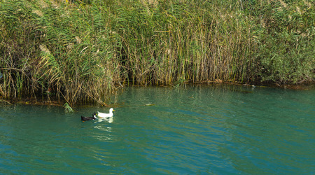Old broken tree branches fell into the water. Duck on the water. Beautiful reflection in the water. Photos of the coast, the view from the sea. The concept of summer recreation, sport, tourism