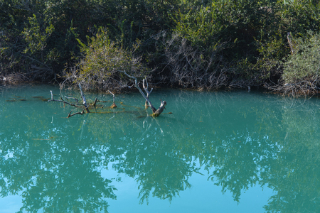 Old broken tree branches fell into the water. Beautiful reflection in the water. Photos of the coast view from the sea. The concept of summer holidays, sports, tourism