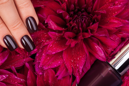 Beautiful nails and flower close-up, great idea for the advertising of cosmetics. Stock Photo