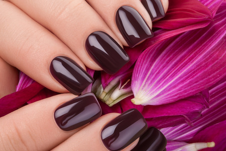 Beautiful nails and flower close-up, great idea for the advertising of cosmetics. Archivio Fotografico