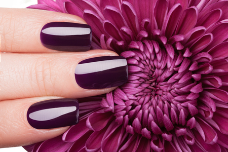 Beautiful red nails and flower close-up.