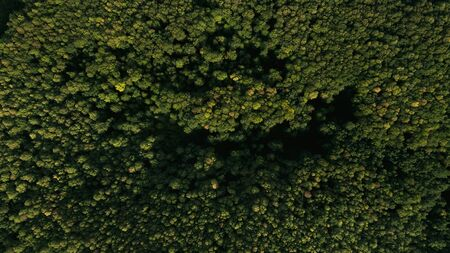High-altitude photography of green forest and nature.