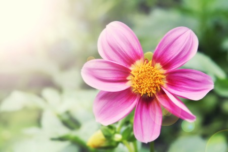 unloading: Macro of a garden flower nature background Stock Photo