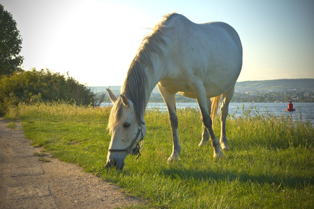 horse is eating grass next to the lake - HD video. See my portfolio for more options.