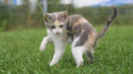 Little kitten walking on the green grass in summer. Kittens outdoor