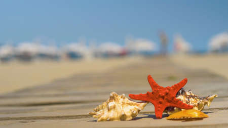 Starfish and seashells on wooden board. Summer holiday background, vacation and travel items. Summer concept with accessories on the sandy beach