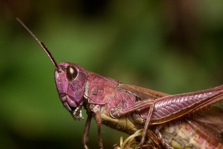 Beautiful grasshopper close up. Animals in wildlife. Summer morning. Stock Photo