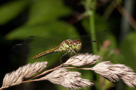 Beautiful dragonfly with transparent wings. Animals in wildlife. Live nature. Stock Photo