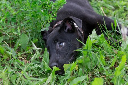 Cute multibred puppy from the dog shelter is lying in the green grass. Hope for life. Standard-Bild - 130515805