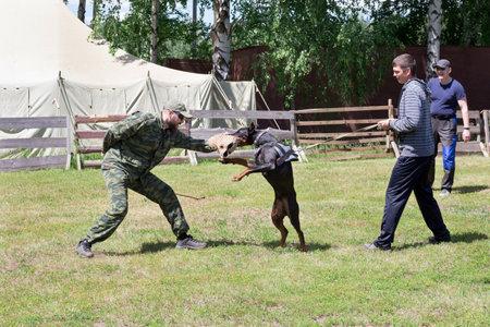 Russia, Izhevsk - June 14, 2020: Dog trainer with a doberman pinscher. Attack demonstration. Dog training center.