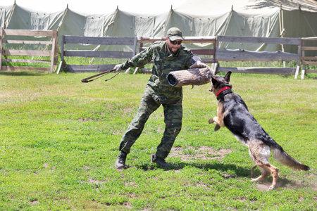Russia, Izhevsk - June 14, 2020: Training a german shepherd dog in cynological club. German shepherd dog in action. Dog training course. Éditoriale