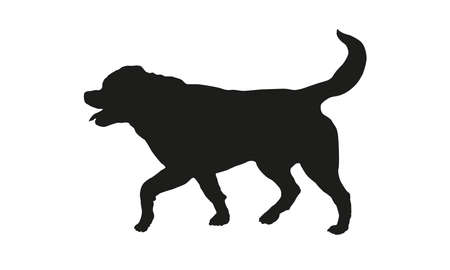Black dog silhouette. Running rottweiler puppy. Isolated on a white background.