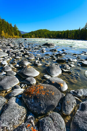 the rough river among a coniferous forest of the tundra  Altai   photo