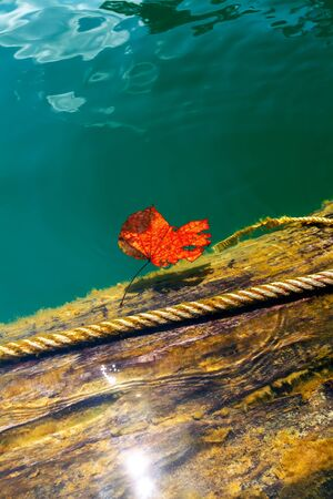One red leaf lying in the blue-green water photo
