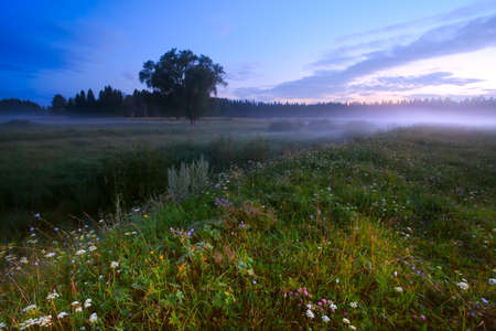 flower tree: Evening meadow and fog on a sunset (Russia)