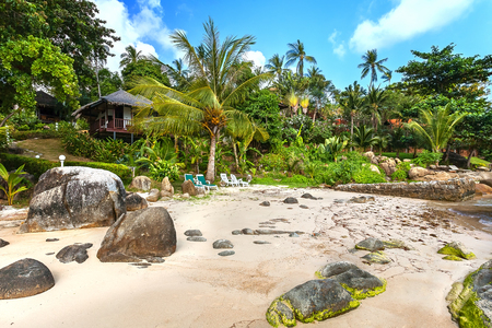 National hotel huts in the greenery, among palm trees on the sandy beach. Park for recreation.