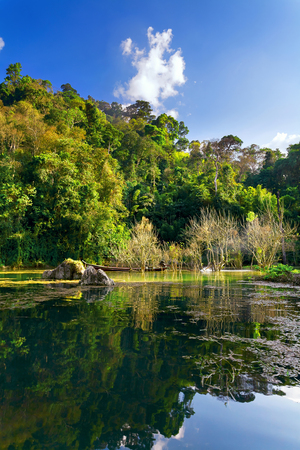 A swampy lake in the jungle. Tall tropical trees in the background Stock Photo