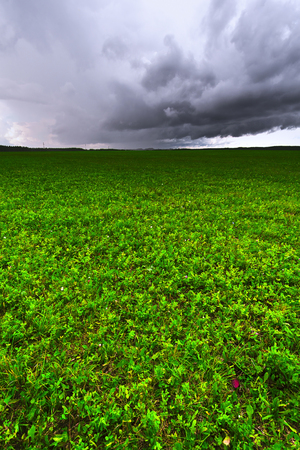 Agriculture field with green grass. Looming thunderstorms and Cumulus clouds. Stock Photo