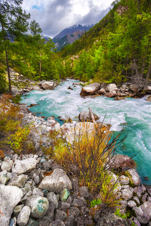 The river with a heavy water flow of turquoise color. High mountains and snow tops under clouds. The coniferous green forest with round boulders.